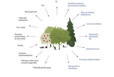 puun hyödyt